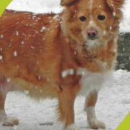 Lilly e la neve