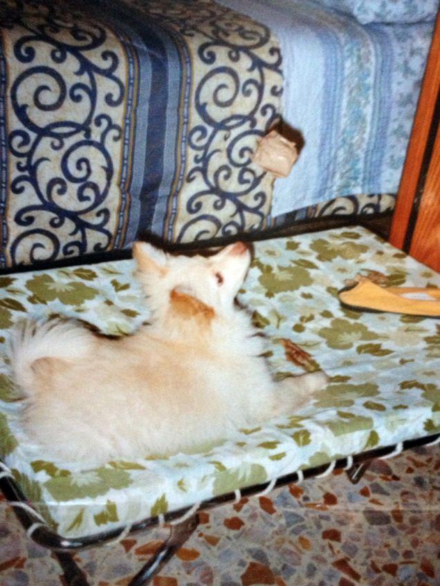 fox cucciolone