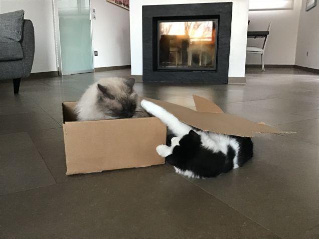 La scatola è mia