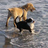 Tekila e Stella al mare