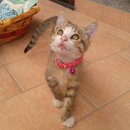Il mio gattino Mely