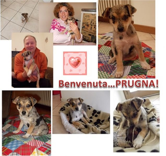 Welcome Prugna!