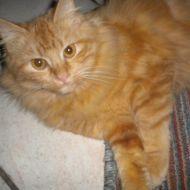 Vi presento Whiskey, la gattina della mia adorata nonna