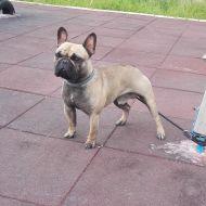 Arturo al parco