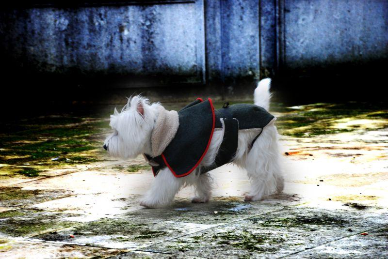 Abbigliamento Cani BritoMarti - Vesti il tuo cane con stile - Spediamo in tutto il mondo !