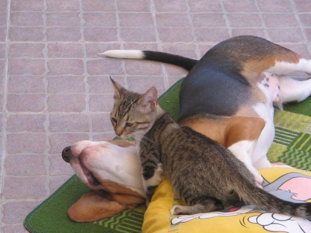 gattina forzuta