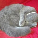 La dolce vita da gatta