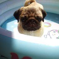 Romeo si fa il bagno!