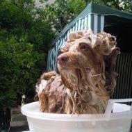 Lady fa il bagnetto!