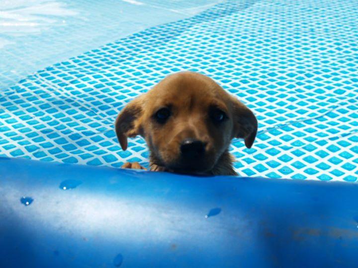 Penny in piscina petpassion - Piscina magnano in riviera ...