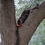 augusto sull'albero