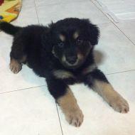 la mia cucciolotta