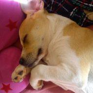 un piccola Stella che dorme