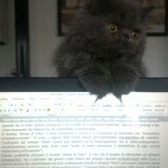 Basta studiare!