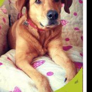 La sua vera natura?!? ...Teo è un incrocio tra un cane ed un divano... :-D