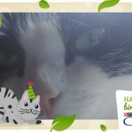 #happybirthdaycatchow72