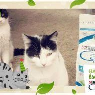 Zorro e Zoe festeggiano con Purina Cat Chow