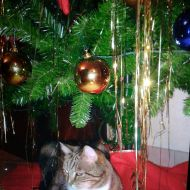 peccato che non sia sempre Natale!!!