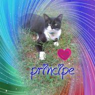 Amo principe perchè mi da' tanto amore