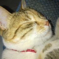 Irina la mia gattina