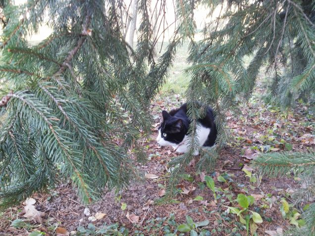 Tilly in giardino