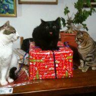 Natale, foto di famiglia