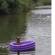 Paky l'avventuroso si spinge impavido su un canotto in mezzo al mare