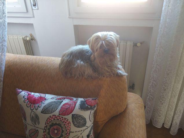 Sul divano petpassion - Posizioni sul divano ...