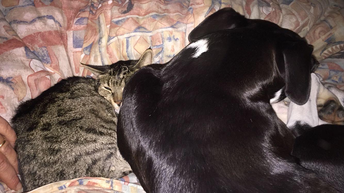 Chi Ha Detto Che Cane E Gatto Non Vanno Daccordo Buona Notte Amici