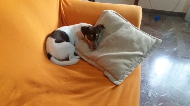 Sul divano petpassion - Scopare sul divano ...