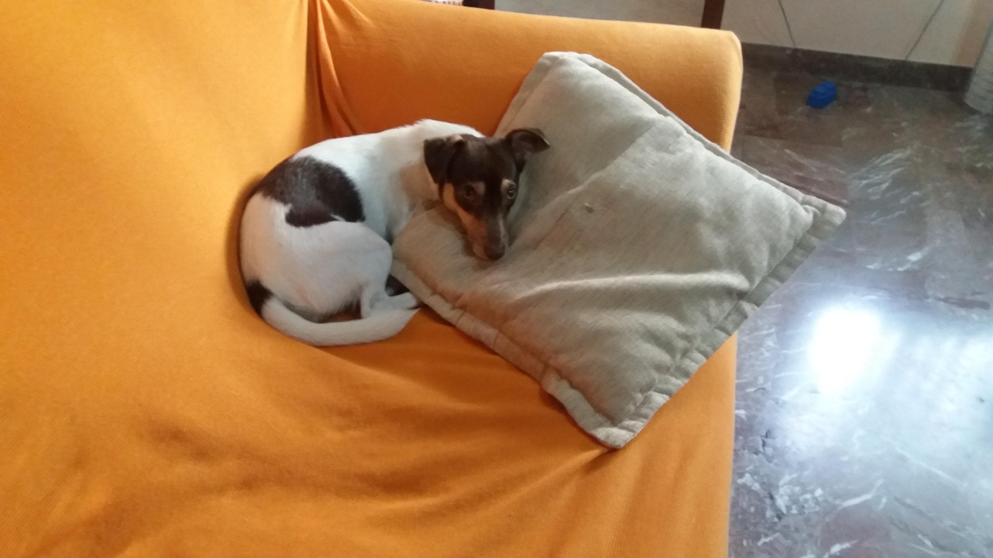 Sul divano petpassion - Pipi sul divano ...