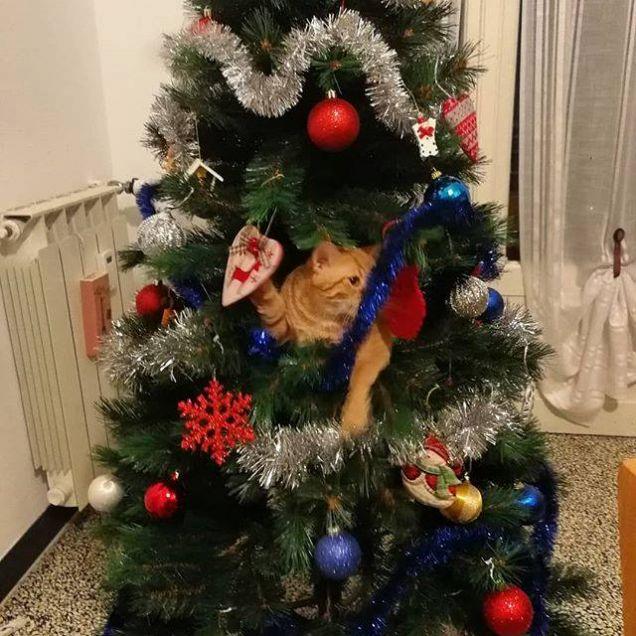Decorazione 'gattosa'