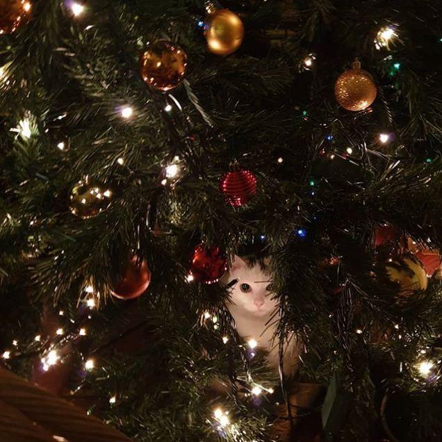 Luci dell'albero di Natale.