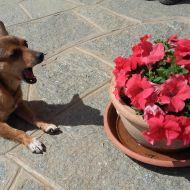 birba , lo sbadiglio, i fiori