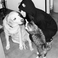 Un amore in comune: i gatti