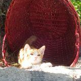 Gli a-mici di topolorsa, gattini del quartiere