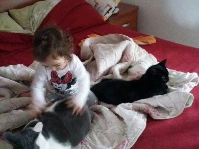 Milo (gatto europeo) Puma (gatto europeo)