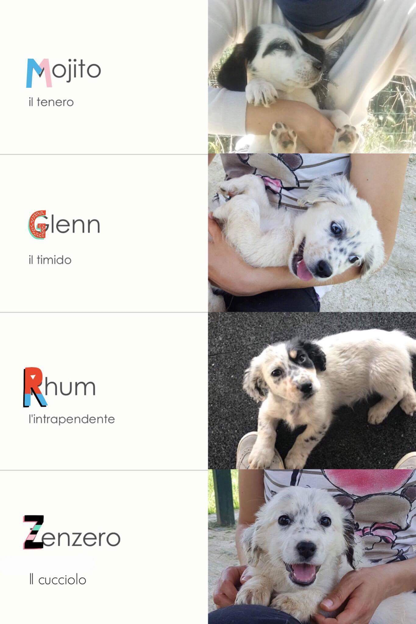Cucciolo | Petpassion