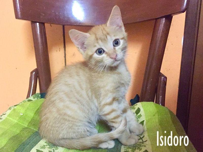 Isidoro, gattino stupendo
