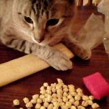 Giornata Mondiale del Gatto!