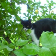 Aisha in giardino