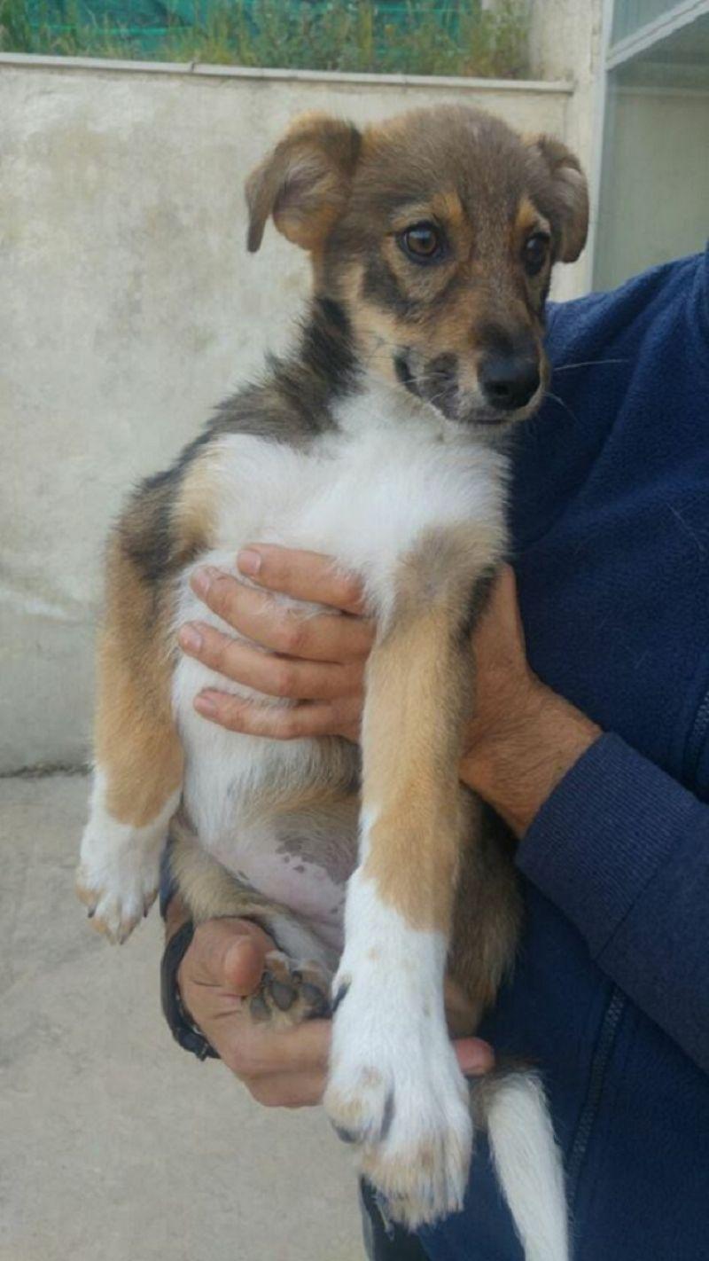 Lola 3 mesi