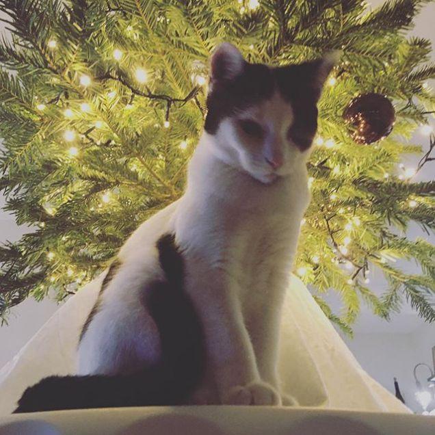 Modella a Natale.