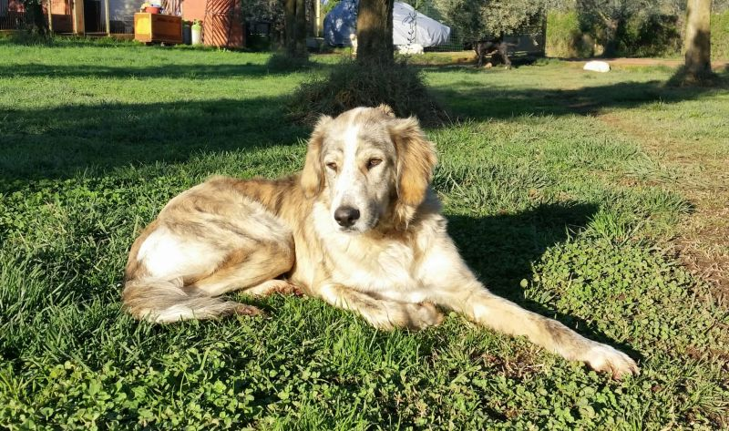 Skinni, bellissima e buona cucciolona in cerca di famiglia