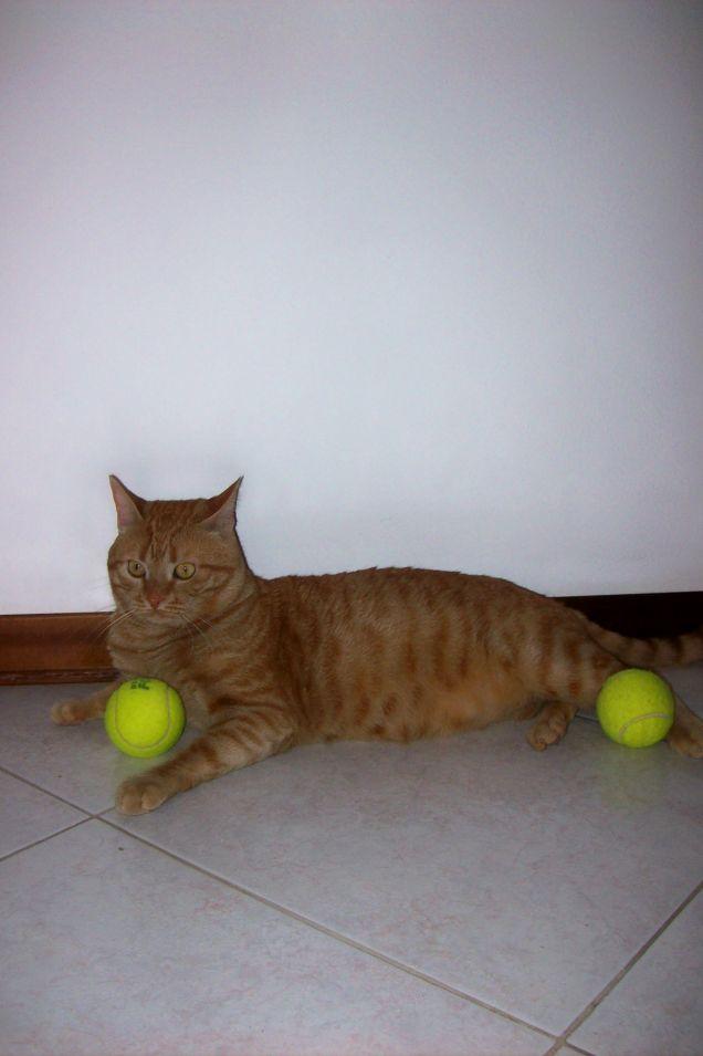 Filippo, il tennista