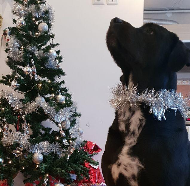 Axel aspetta  i regali !!