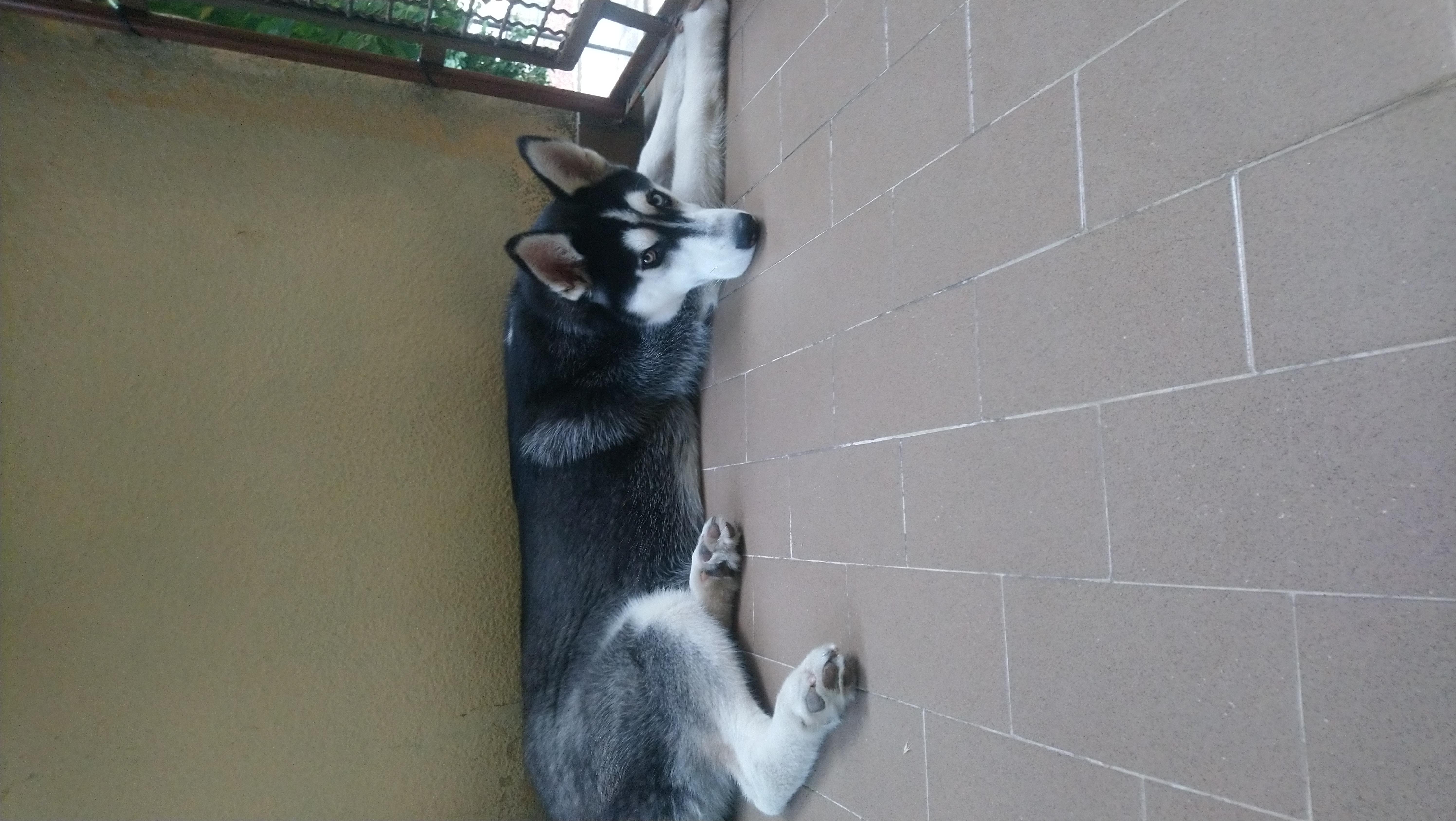 Tyson in relax