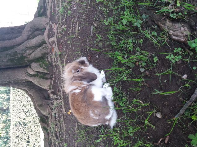 Sotto la quercia