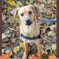 Sally tra le foglie!