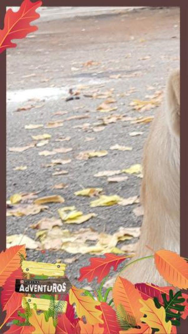 Leila e le sue foglie